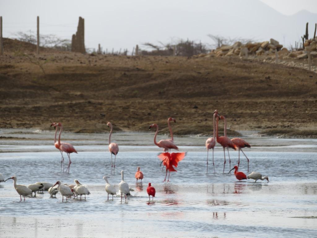 Flamingo in La Guajira